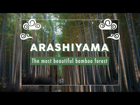The Most Beautiful Bamboo Forest - Arashiyama