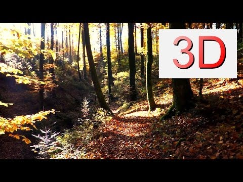 3D Video 4K: OCTOBER FOREST WALK (4K Resolution)