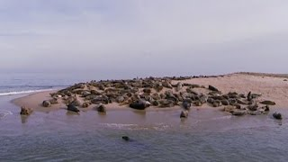 Seal surge becoming a problem on Cape Cod coast