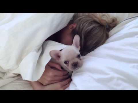 Rich Surprises Sara! French Bulldog Puppy