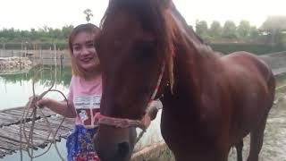 How To Training Basic Horse Care And Learning Clean About Horse For Beginners 1