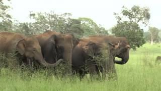 Tajemstvo divočiny - Slon Indický