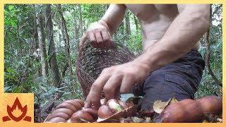 Primitive Technology: Making poisonous Black bean safe to eat (Moreton Bay Chestnut)