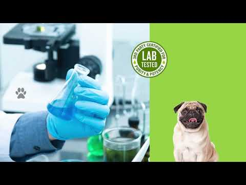 Natural CBD Oil for Pets | King Kanine