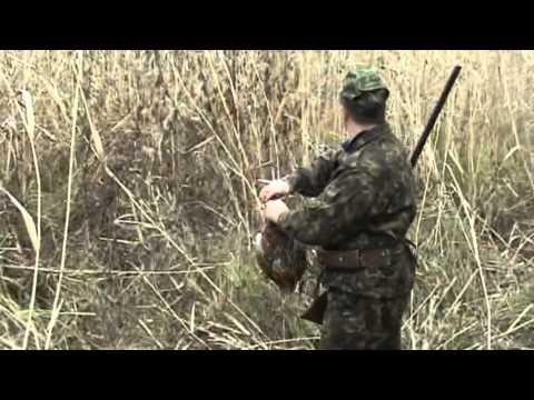 Охота на фазана в Украине