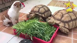 Funny Animals VN | Funny Animal | Cute Animals Doing Funny Things Full Funny Pets | HD