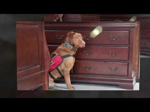 K-9 Bed Bug Detection