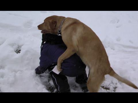 Ова семејно куче МНОГУ СЕ ВОЗБУДУВА кога некој ќе падне во снегот