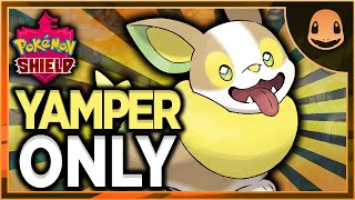Can I Beat Pokemon Shield With Only Yamper?? (NO ITEMS IN BATTLE)