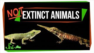 7 Animals We Used to Think Were Extinct (But Aren't!)