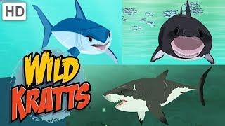 Wild Kratts 🦈🌊 Sharks: Predator and Prey   Shark Week   Kids Videos