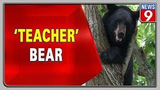 Watch this viral video of a bear teaching her cub to climb..