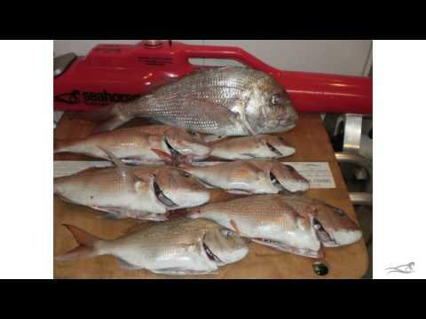 Kontiki Fishing - Seahorse Customer Gallery