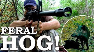 WILD BOAR Catch and Cook in TEXAS! | Wilderness Survival Challenge! Ep21