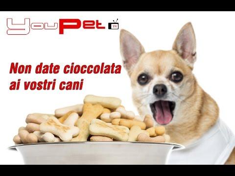 Non date cioccolata ai vostri cani