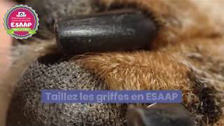 Entrainement aux soins animaliers et toilettage de base pour éducateurs canins ESAAP