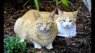 Tiếng Mèo kêu đuổi Chuột và gọi bạn tình Hot nhất -File MP3 chuẩn - Hình ảnh đẹp-Known cat and mouse