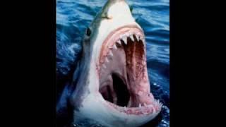 鮫スライドショー10