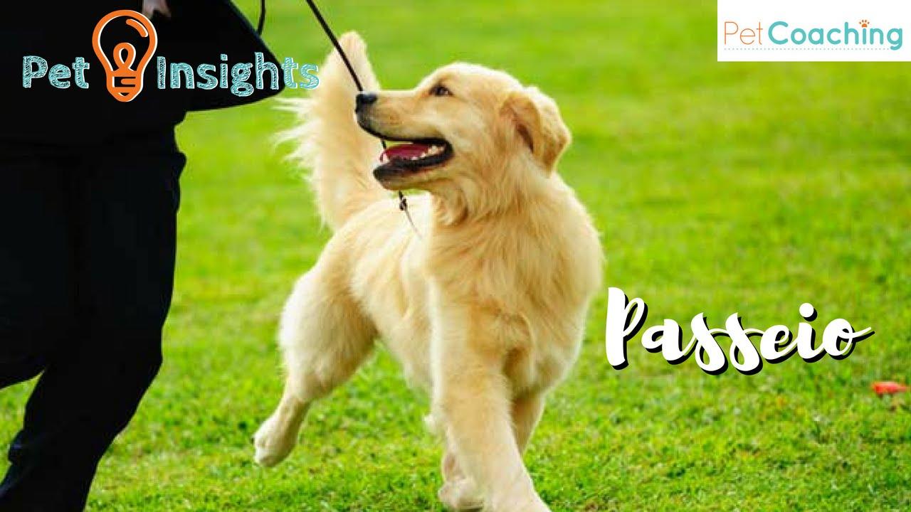 PetInsights: O Passeio