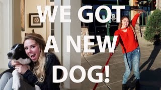 I ADOPTED A DOG FROM A SHELTER!!