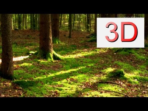 3D Video: A Forest Dreamscape