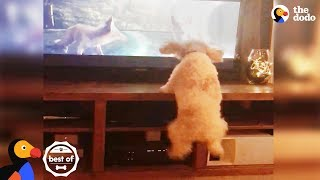 Dog Jumps With Animals On TV + Funny & Cute Videos April 2018 | The Dodo Best Of