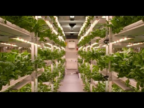 AmplifiedAg, Inc. wholly-owns Vertical Roots, the largest hydroponic container farm in the world. Vertical Roots indoor farm production operates with AmplifiedAg's holistic indoor farming platform.