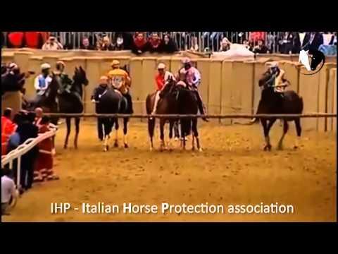 Palio di Asti 2013: la morte del cavallo Mamuthones