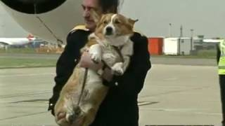 Queen with corgis at Heathrow - rushes