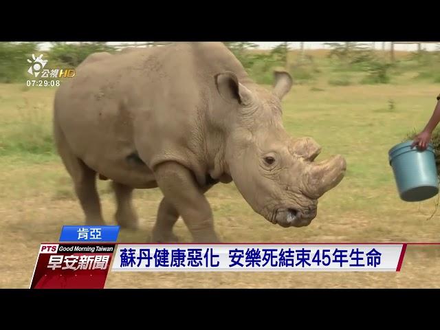 全球最後北非公白犀牛 安樂死離世