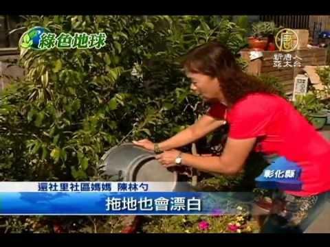 自製精油防蚊乳液配方 | 香草精油學院 CAREIN(康茵)專業芳 …_插圖