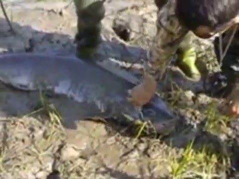 fishing taimen таймень тугур бичи рыбалка хабаровск