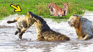 Huge Mistake Of The Crocodile When Provoke Lion Queen! Epic Battles Of King Lion Vs Crocodile