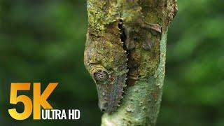 5K African Wildlife | African Nature Showreel 2019 by Robert Hofmeyr