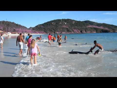 Spašavanje delfina