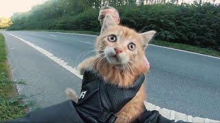 Biker Saves Kitten From Busy Road