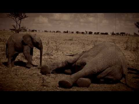 Safeguarding a Future for Africa's Elephants
