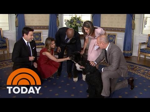 It's Bo And Sunny! The Obama Family Dogs Join The TODAY White House Tour   TODAY