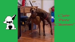 Funny Dogs And Cats Videos Compilation 2019 #7 - Cute Pets Channel