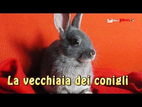 La vecchiaia dei conigli
