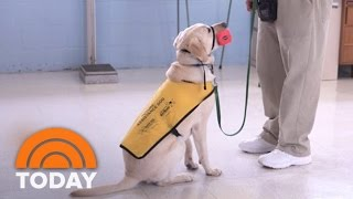 Prison Inmates Train Service Dogs To Aid Wounded Military Veterans | TODAY