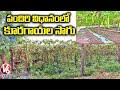 పందిరి విధానంలో కూరగాయల సాగు : Farmer Hanif Success Story | V6 News