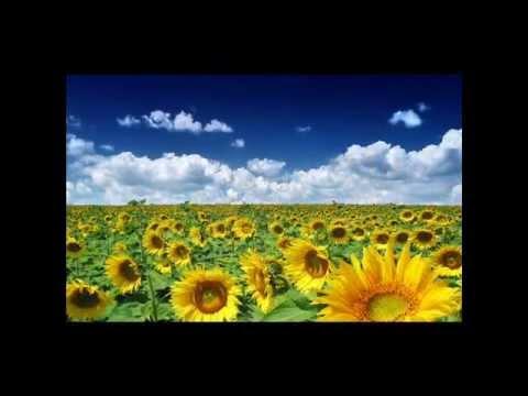 Летние цветы.Цветы, цветущие все лето.