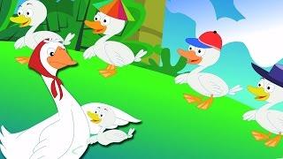 Cinq Petits Canards | garderie rimes | vidéos pour enfants | Nursery Rhymes | Five Little Ducks