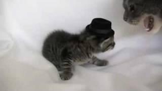 Kitten Wearing a Tiny Hat