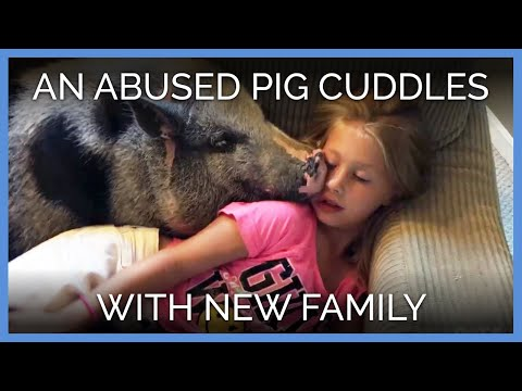 Abused Pig Cuddling With His New Family Will Give You All the Feels | PETA Animal Rescues