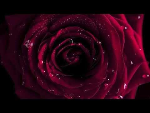 Ariana Saraha ~ La Rosa Enflorece {Los Bilbilicos}