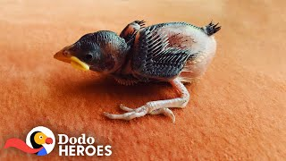 1-Day-Old Sparrow Makes His Rescuer Fill Her House With Baby Birds  | The Dodo Heroes