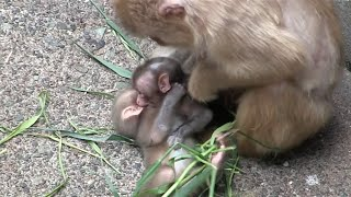 Angry mom bullied the baby monkey newborn