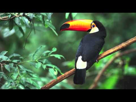 Tropical Rainforest Biome Youtube